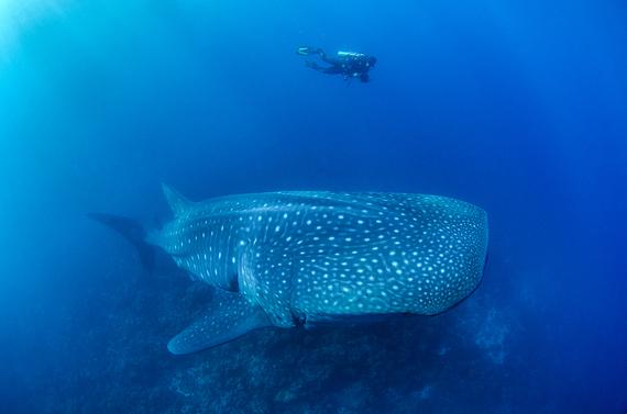 2014-05-12-whaleshark1.jpg