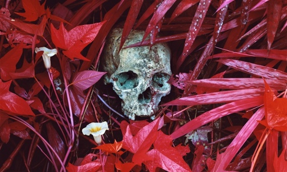 Of Lillies And Remains, 2012 © Richard Mosse