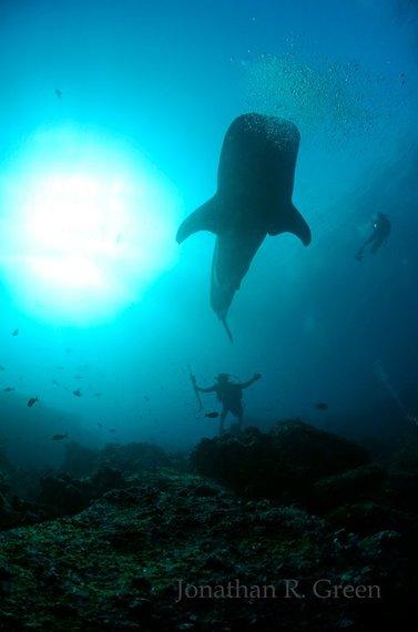 2014-05-13-whaleshark4.jpg