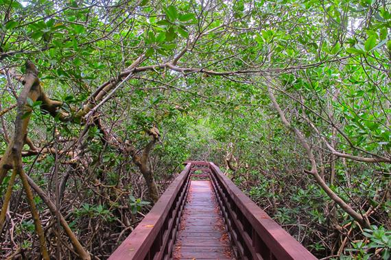 2014-05-14-mangroveviequesjeralyngerba.jpg