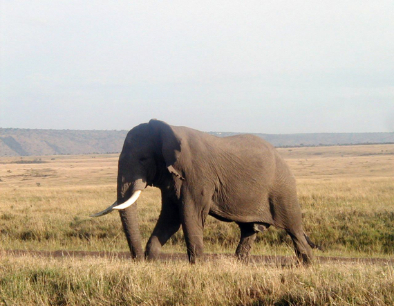 2014-05-15-05BullElephant.jpg