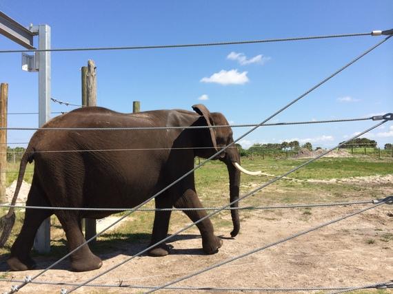 2014-05-15-Elephant.JPG