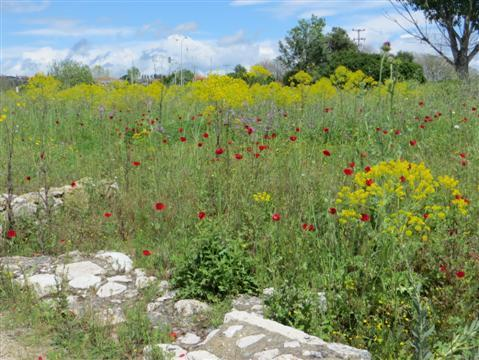 2014-05-15-GreekMainland1312Custom.JPG