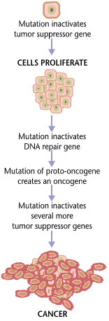 2014-05-16-Cancer_requires_multiple_mutations_from_NIHen.png