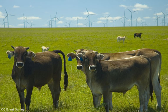2014-05-16-windcows.jpg