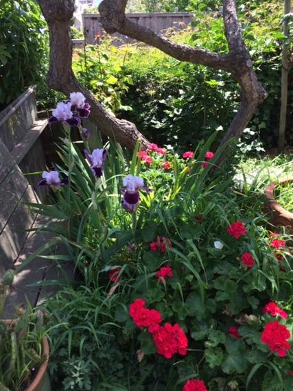 2014-05-22-gardenimage_flowers_fence_tree.JPG