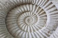 2014-05-23-fossil.jpg