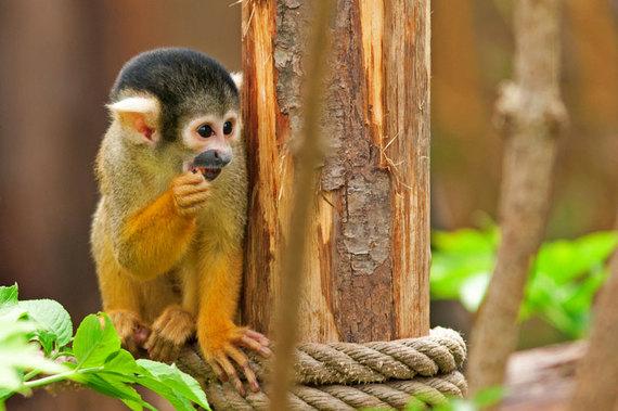 2014-05-23-monkey1955130.jpg