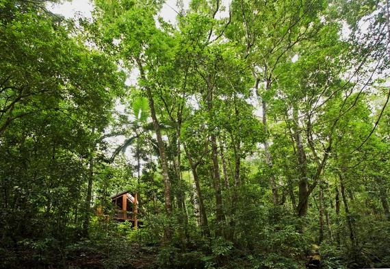 2014-05-26-09canopy_rainforest.jpg