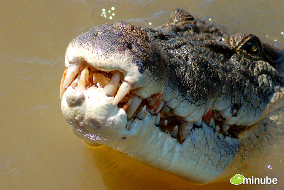2014-05-27-JumpingCrocodileCruiseNaxos.jpg