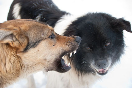 2014-05-28-2dogsfightingsmaller.jpg