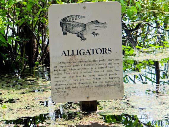 2014-05-28-AlligatorsStAndrewsPark.jpg