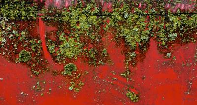2014-06-01-Redwallgreenalgae.jpg