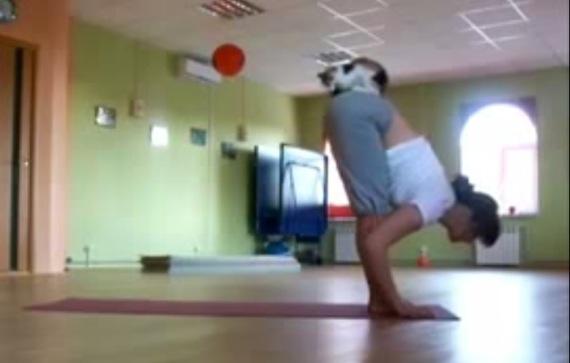 yogawithcat01