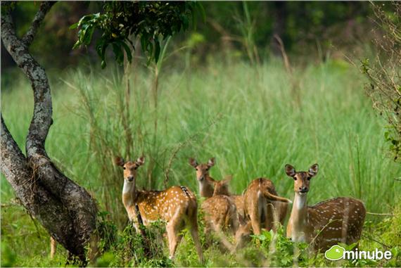 2014-06-03-ChitwanNationalParkOlance.jpg