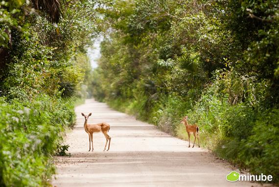 2014-06-03-EvergladesVictorGomez.jpg