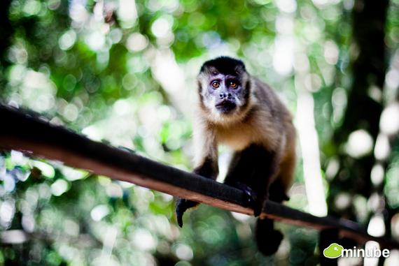 2014-06-03-PantanalMatogrossenseSandraCarrillo.jpg
