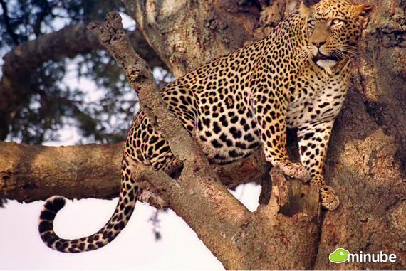 2014-06-03-SerengetiNationalParkAlfonsoNavarroTppero.jpg