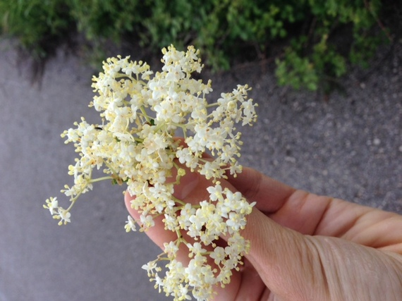 2014-06-03-elderflower.JPG