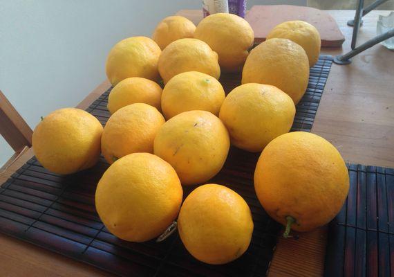 2014-06-11-Lemons.jpg