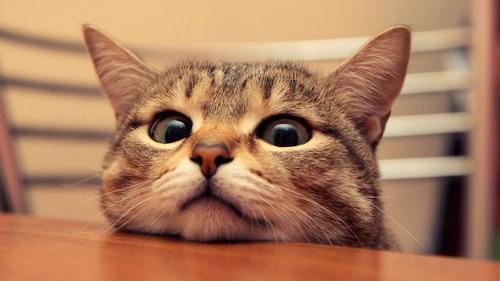2014-06-12-cat.jpeg