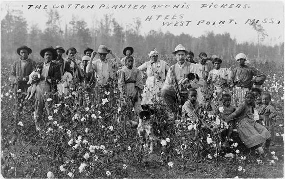 2014-06-17-CottonSouth.jpg