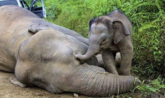 2014-06-17-ElephantpoachersEarthDrReeseHalter9
