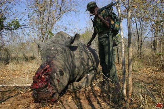 2014-06-17-RhinoSlaughter2EarthDrReeseHaltercopy.jpg