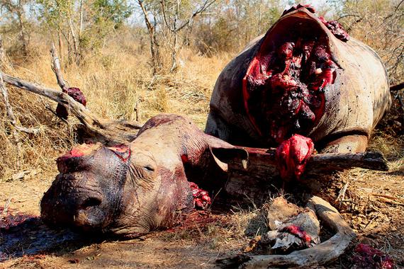 2014-06-17-RhinobrutalmurderEarthDrReeseHalter.jpg