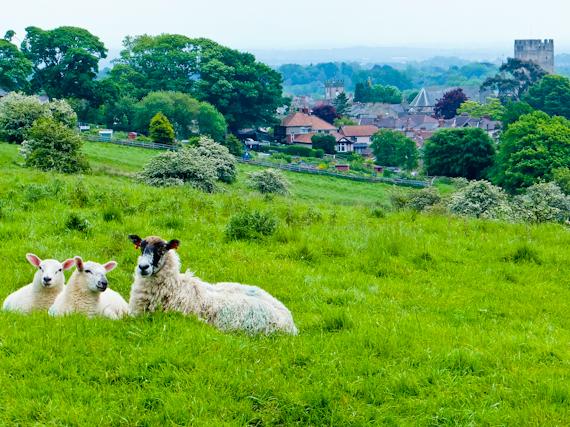 2014-06-17-SheepandRichmond.jpg