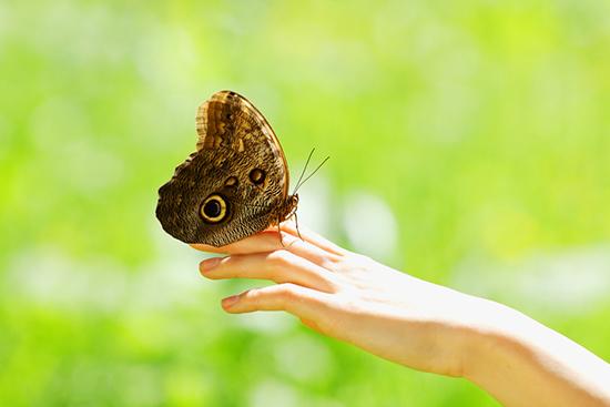 2014-06-20-butterfly1.jpg