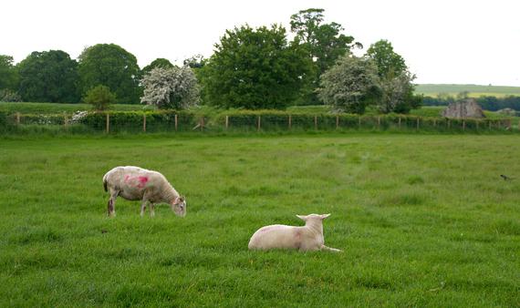 2014-06-20-sheep.jpg.jpg