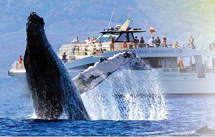 2014-06-24-whalewatch12pwf.jpg