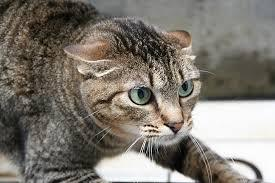 2014-06-29-cates.jpeg
