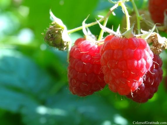 2014-06-29-itllbegrand_freshraspberries.jpg
