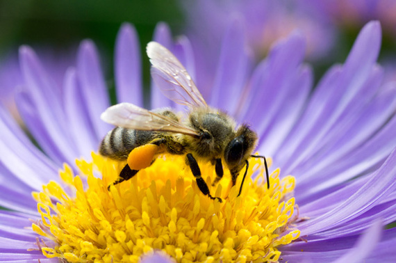 2014-06-30-bee_flower.jpg