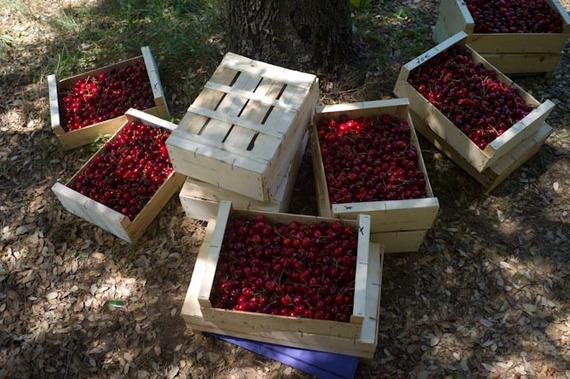 2014-07-01-cherrycrates.jpg