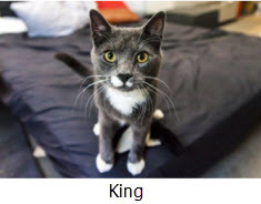 2014-07-02-king.jpg