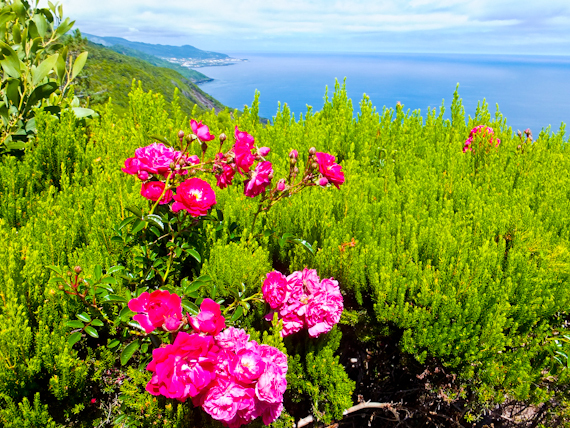 2014-07-03-PicoSeascapewflowers.jpg