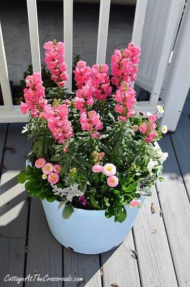 2014-07-07-3sunflowers.jpg