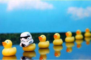 2014-07-08-duck.JPG