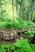 2014-07-10-headwaters.jpg