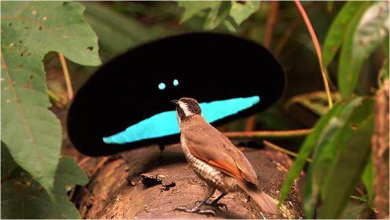 2014-07-10-paradisebird.jpg