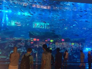 2014-07-15-Aquarium.JPG