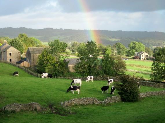 2014-07-21-Yorkshirecowsandrainbow.jpg