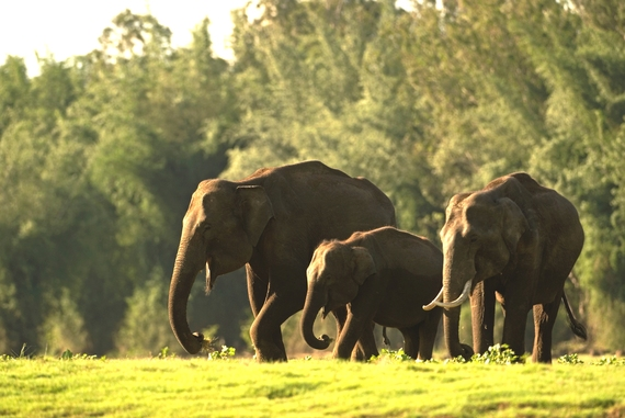 2014-07-23-Elephantfamily_KalyanVarmalightened.jpg