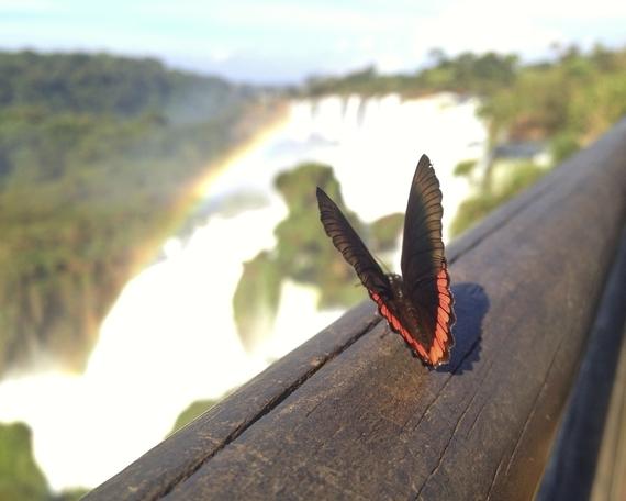 2014-07-24-rsz_butterfly.jpg