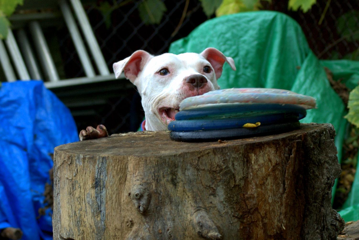 2014-07-30-pitbull2.jpg