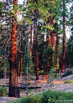 2014-07-31-Yosemite2.jpg