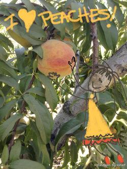 2014-07-31-peaches1.jpg